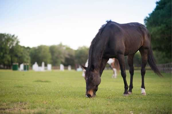 Horse at Seabrook Island Equestrian Center