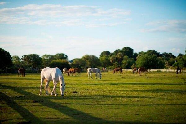 Charleston Horseback Riding