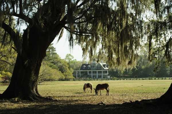 Magnolia Plantation Charleston Historic House Tour