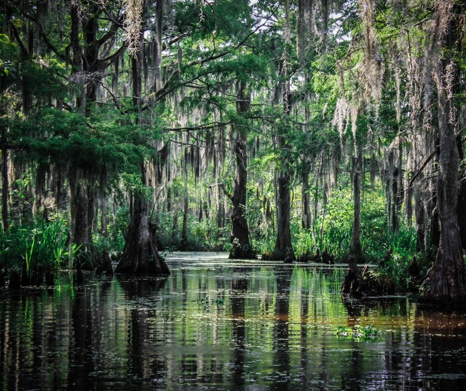 Swamp with cypress trees at Cypress Gardens.