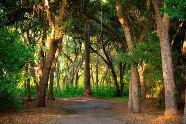 Nature Trail Night Heron Park